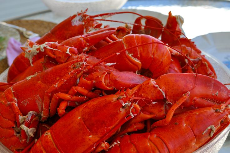 Soft-shelled Maine lobsters - what a treat!
