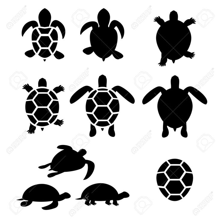51249043-Set-of-turtle-and-tortoise-silhouette-vector-Stock-Photo.jpg (1300×1300)