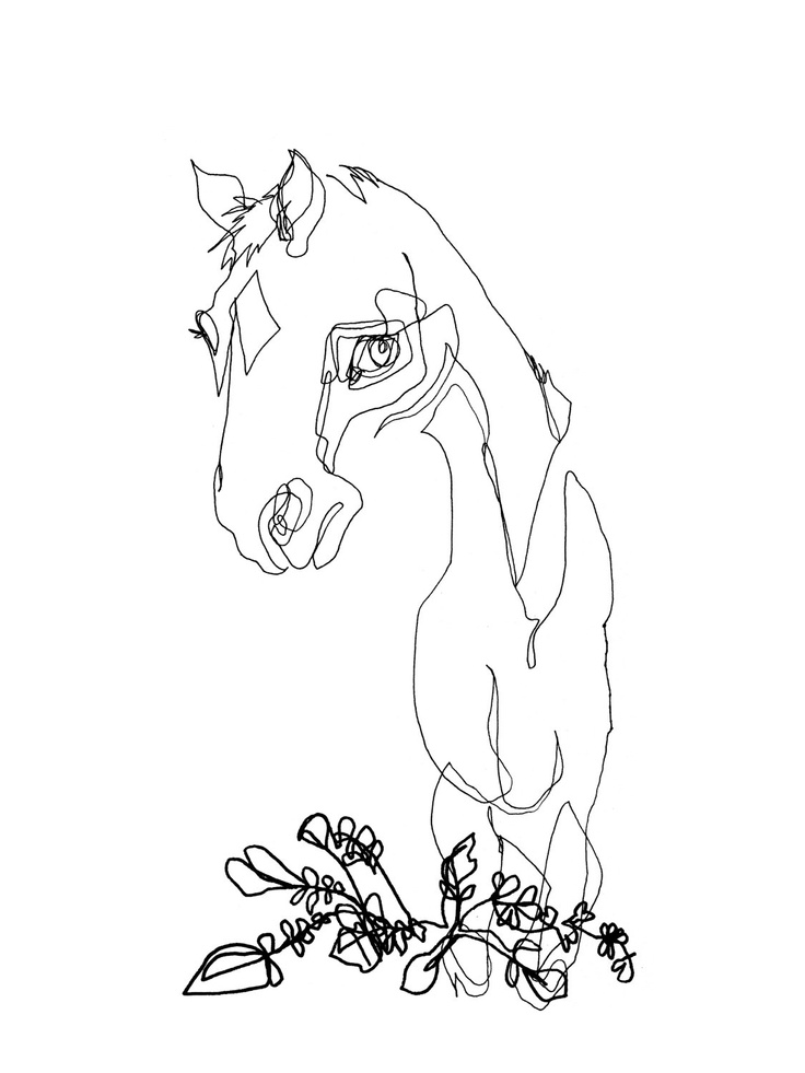 Contour Line Drawings Of Animals : The best blind contour drawing ideas on pinterest