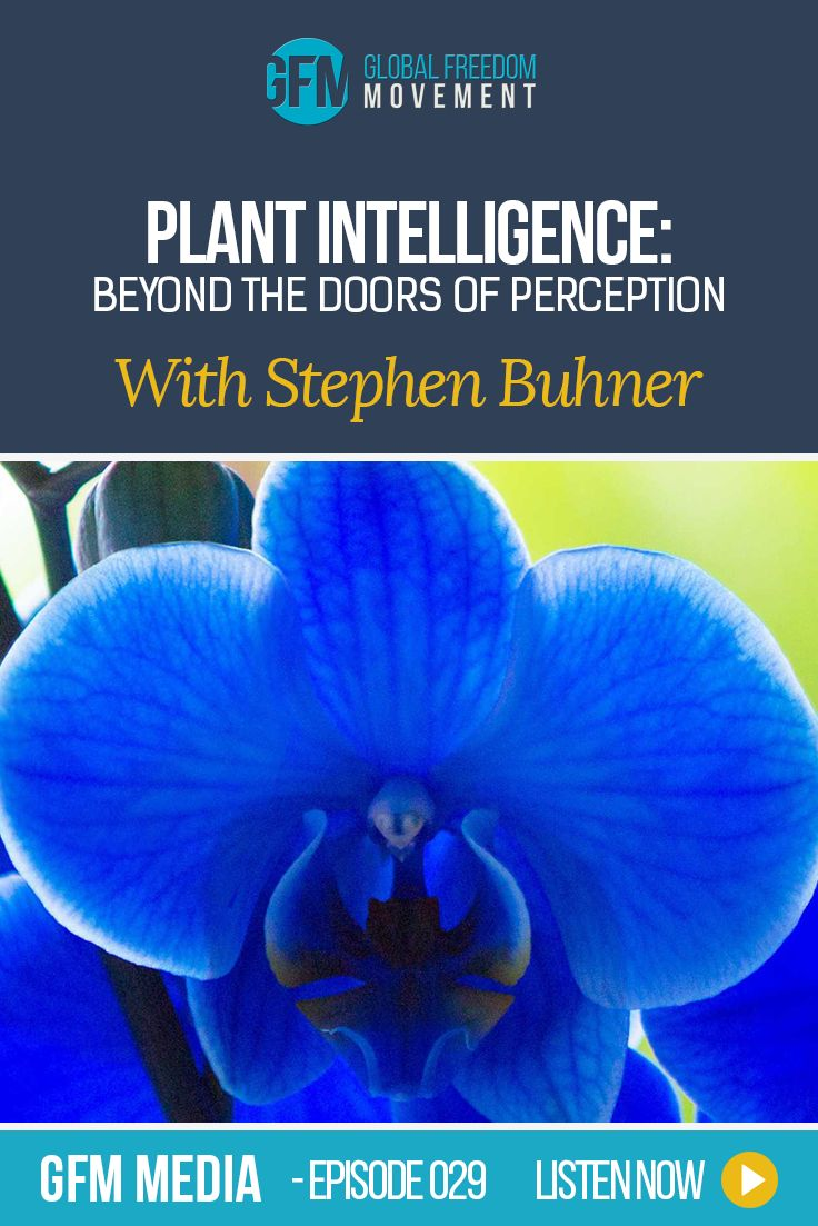 An inspiring interview with Stephen Harrod Buhner. Stephen is the award-winning author of twenty books on nature, indigenous cultures, the environment and herbal medicine. He comes from a long line of healers. Stephen Buhner explains how the work of his grandfather led him into closer rapport with the plant world, and ultimately the consciousness immanent within. His books are a balm for wounded souls in a corporatized world dominated by reductive 'science' and profit-driven ideologies.