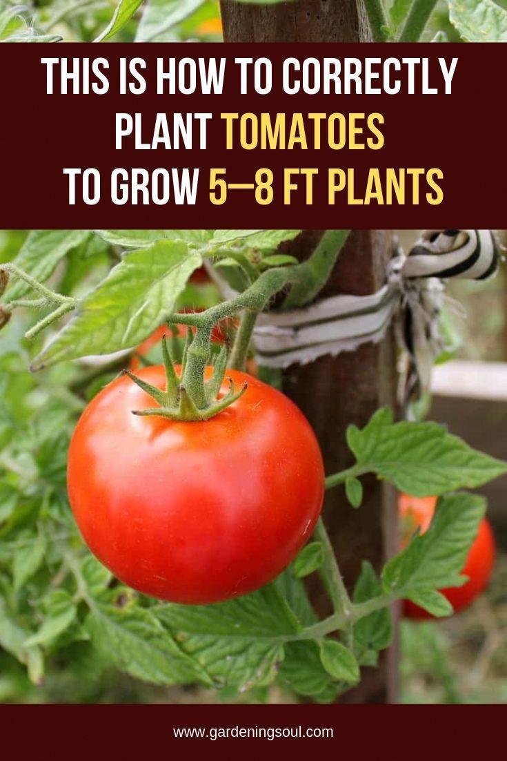 ad0e637d56c944e017fc4bf9ef0e0c81 - Expert Gardener Organics Vegetable & Tomato Food