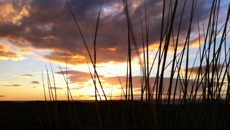 Through the tussock grass - Himatangi Beach - Amanda Simpson
