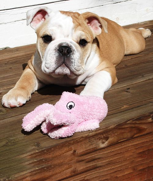 bulldog froglegs and a smile.. perfect..