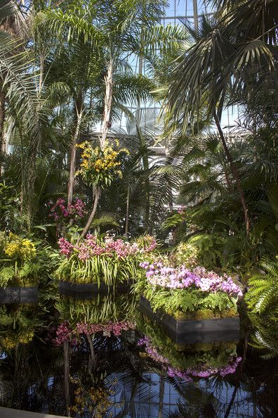 Tropical Tableau.  The Orchid Show opens with a massed display of orchids and palms reflected in a pool under the conservatory's dome.