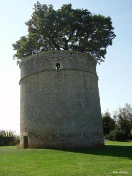 Le chêne du pigeonnier de Pouzay, Béceleuf (Deux-Sèvres)   Krapo arboricole