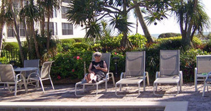 Lista de plantas de pleno sol para a área da piscina. A adição de plantas à área ao redor de uma piscina torna a paisagem mais atraente. No entanto, os solos secos típicos das áreas ensolaradas podem dificultar a escolha de uma planta que possa se desenvolver bem. O uso de cobertura de solo na área da piscina ajuda a conservar a umidade e, além disso, escolher as espécies certas para uma área com ...