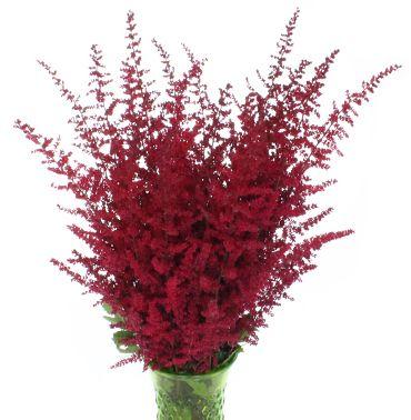 Red Astilbe Flower - FiftyFlowers.com