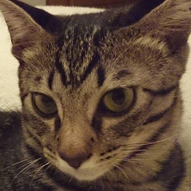 土曜はやっぱり#土アップ祭 これもあんな頃~でいっちゃお🎵  #きじとら#キジトラ#にゃんすたぐらむ#にゃんとかめら#猫のいる暮らし#保護猫#猫のいる生活#やんちゃ猫#猫好きさんと繋がりたい#ネコ#猫#ねこ#にゃんこ#愛猫#愛猫家 #あんな頃もあったなバトン #土あっぷ祭 #cats#catsofinstagram#catsofinstagrams#japan chat#cat#nyaspaper#7catdays