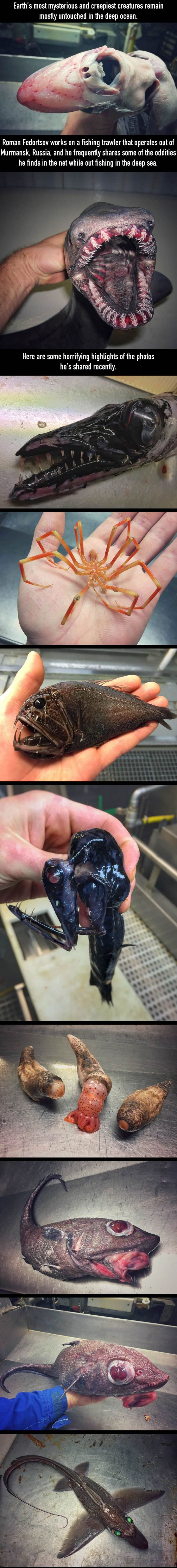 We've only discovered a tiny fraction of the deep sea creatures.<<<And I'm incredibly concerned...
