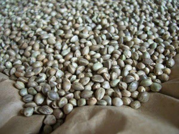 Proprietà dell'olio di semi di canapa