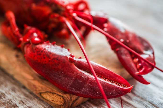 Do you love lobster but are unsure about how to purchase and prepare it at home? Read this and learn how to boil, steam, grill & butter poach like the pros.