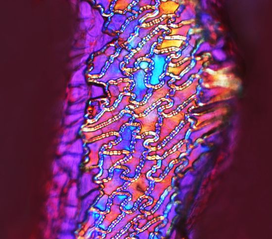 Skin of a cayenne pepper under the microscope…Beautiful!!!