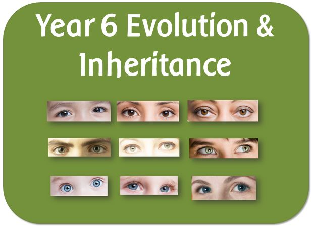 Evolution lesson ks2