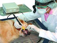 Vetflexx - Expertos en tecnología veterinaria - Máquina de Ultrasonido y Pulida…