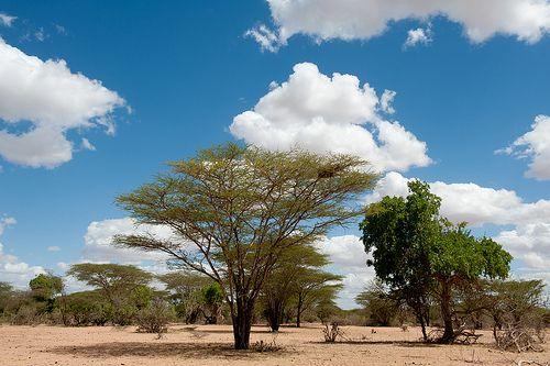 http://adesoafrica.org/  © Jennifer Huxta