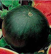 Melon - Watermelon Sugar Baby