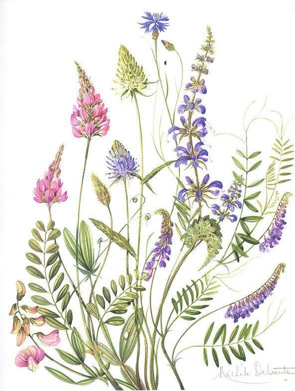 Botanical art by Michele Delsaulte
