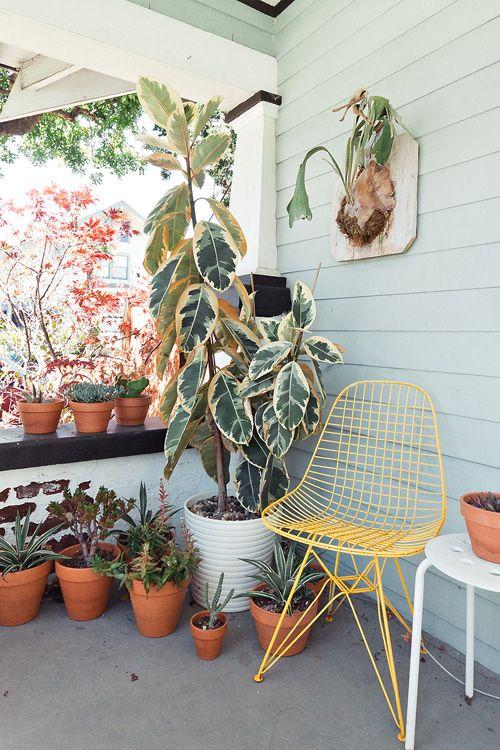 escuyer:  Terrace plants