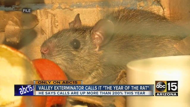 Valley Pest Control Company Says Roof Rat Calls Up 200 Percent Pest Control Roof Rats Safe Pest Control