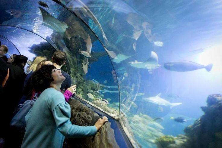 SEALIFE After Dark & Prosecco 28th November @ London Aquarium