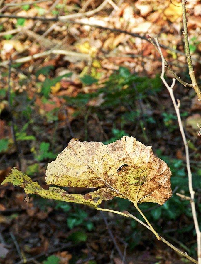 Leaf by Nancy Vajaianu on 500px