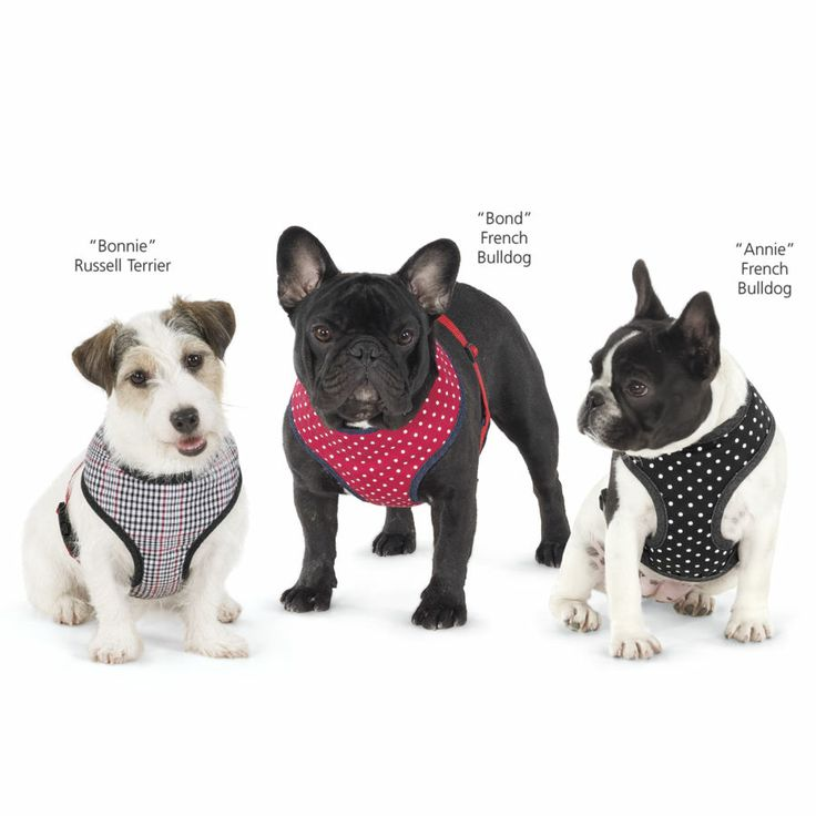 Padded Pattern Harness From In The Company Of Dogs Dog