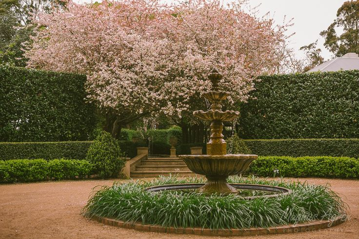 Blossoms by the fountain.