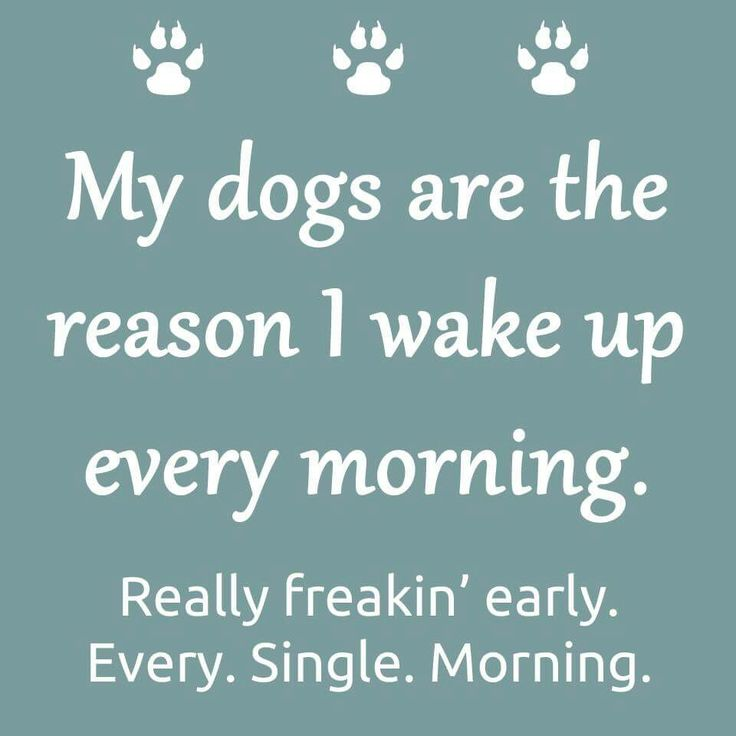 Heehee! But they really are and they put a smile on my face when they wake me up every morning with kisses! ❤❤