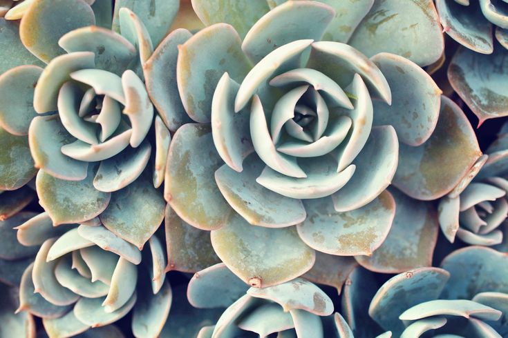 Succulent Photography, Fine Art Photography, Nature Photography, Garden Art, Succulent Wall Decor, Succulent Photo