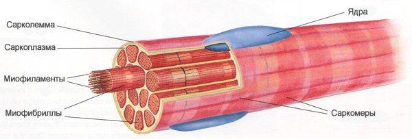 Гипертрофия мышц и набор массы, как набирать вес максимально быстро / Идея Воркаута