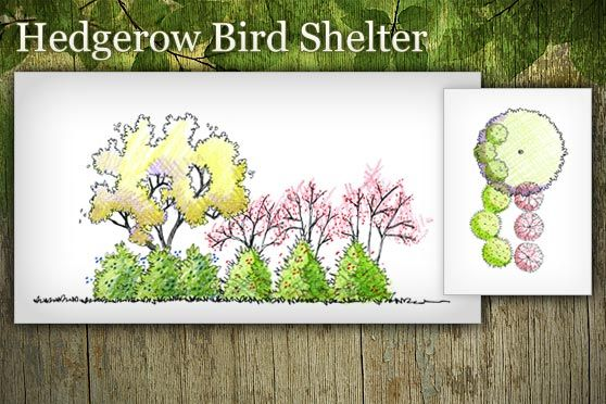 this would be great for barrier btwn neighbors and our house.  I really like this plan.Birds Shelters, Hedgerow Arborday Org, Arrowwood Viburnum, Barrier Btwn, Landscapes Plans, Birds Magnets, Attraction Birds, Btwn Neighbor, Landscapes Design