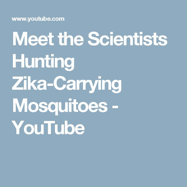 Meet the Scientists Hunting Zika-Carrying Mosquitoes - YouTube
