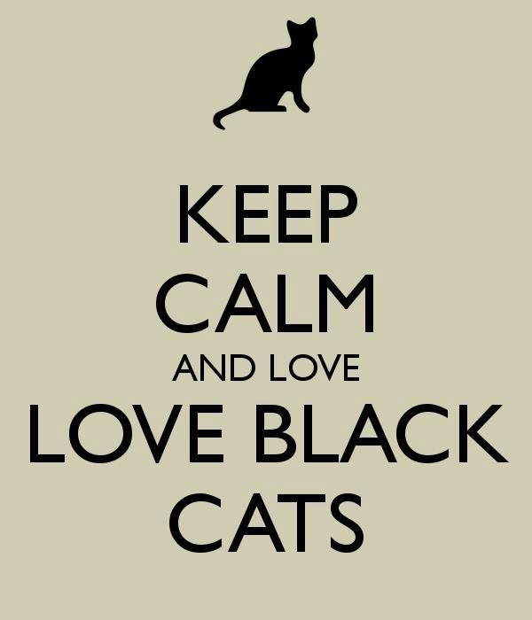 Black cats get a bad rap, but these gorgeous kitties bring lots of love to the people who accept them into their hearts! (DEFINITELY!!!)