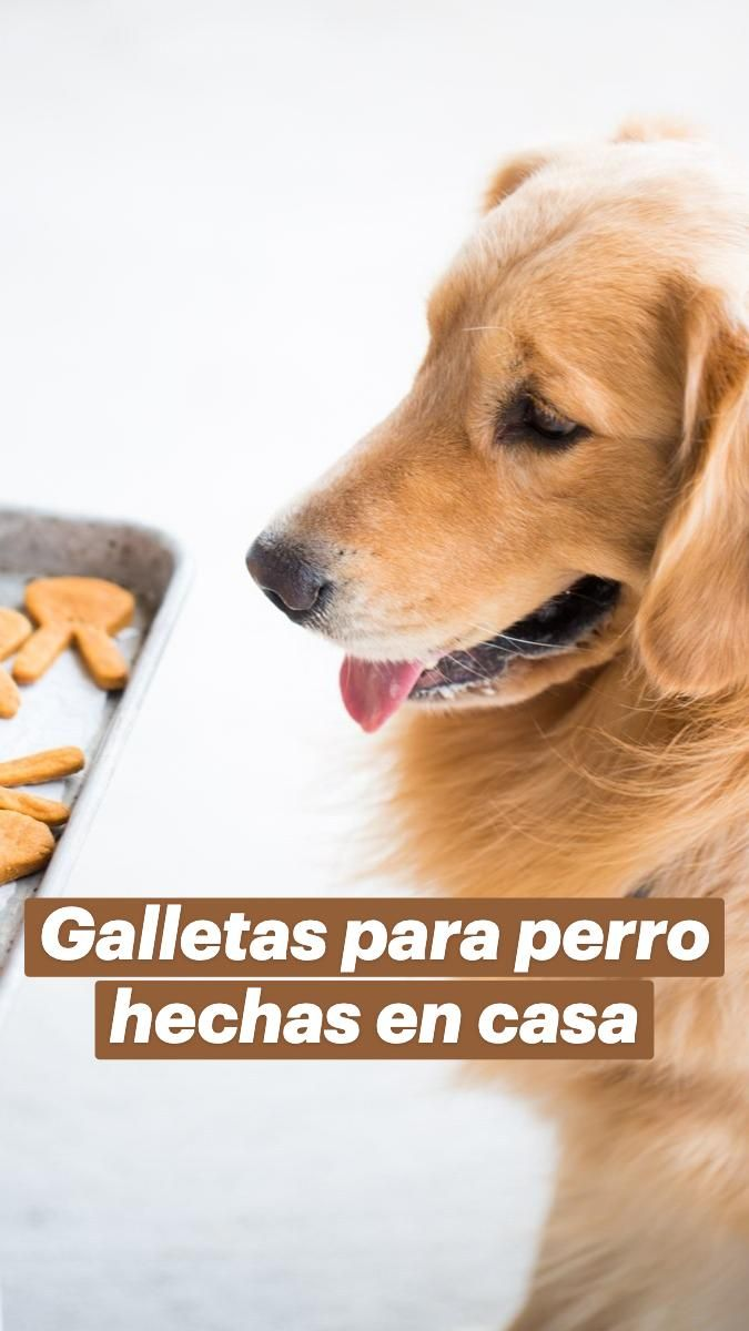 3 Ingredient Dog Treats, Cute Puppies, Dogs And Puppies, Homemade Dog Treats, Doggie Treats, Peanut Butter Dog Treats, Delicious Vegan Recipes, Easy Recipes, Dogs Of The World