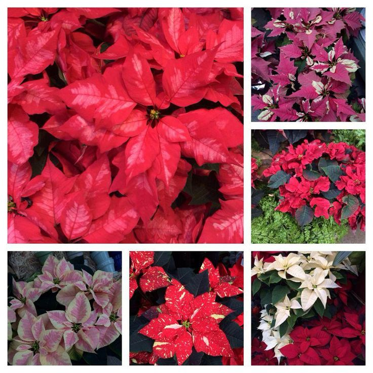 Christmas Tree Flower Power : Best images about holiday magic at sky nursery on