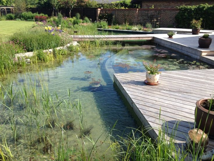 Natural Swimming Pools A No Salt No Chlorine No Chemical Low Care Alternative To Traditional