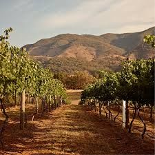 mudgee wineries - Google Search