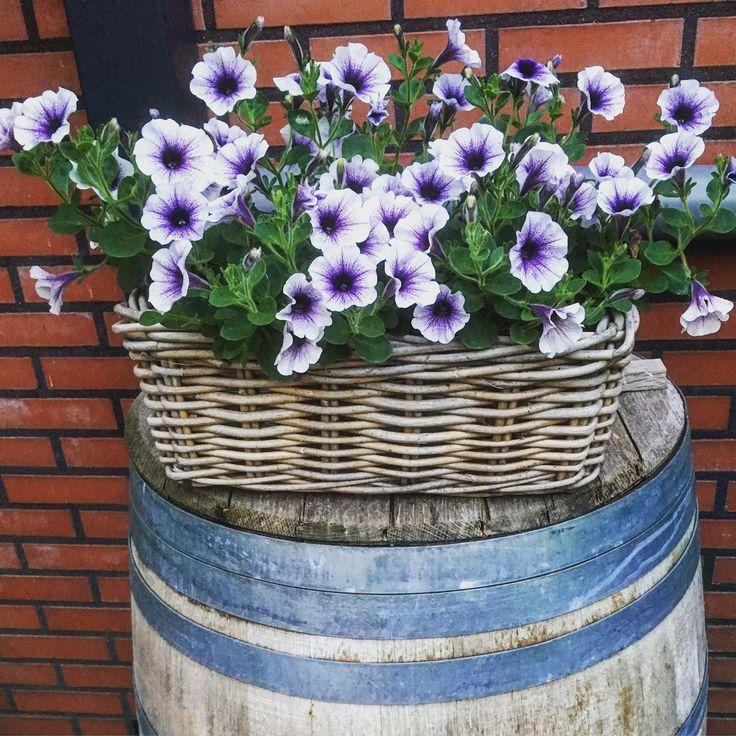 Wine barrel with on top flowers in a basket / wijnvat met daarop een mand met eenjarige zomerbloeier
