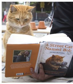 A Street cat Bob: James Bowen was a recovering heroin addict trying to put his life back together when he met a stray cat who needed a friend as much as he did...