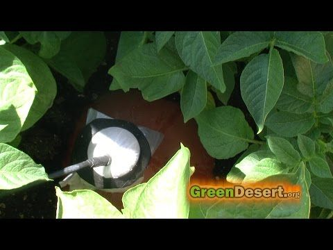 An example of how you can auto fill your #ollas using harvested #rainwater.  How to save money on your water bill. To #conserve water, we use ollas.  A simple underground watering technique using clay pot irrigation. http://greendesert.org/ollas.html  How to link all your ollas together. https://youtu.be/KGxqShoGKFI  http://Twitter.com/thegreendesert http://Facebook.com/TheGreendesert http://pinterest.com/GreenDesert http://green-desert.tumblr.com/  #solarpower #sandfilter #urbanfarming