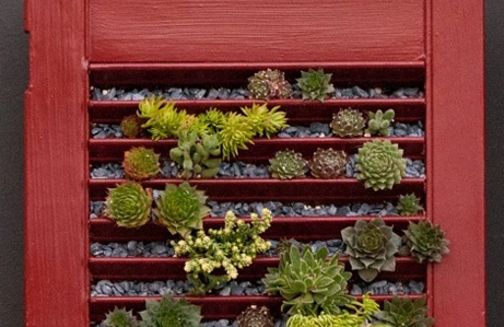 DIY idea: shutter succulent planter