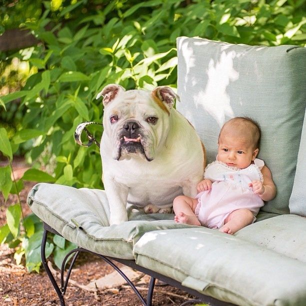 protection kid bulldog