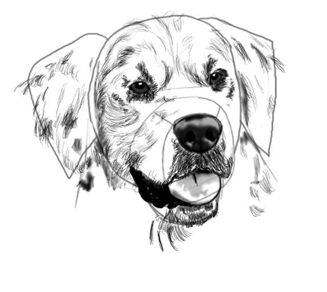 How To Draw A Golden Retriever Face In 2019 Pets Pinterest
