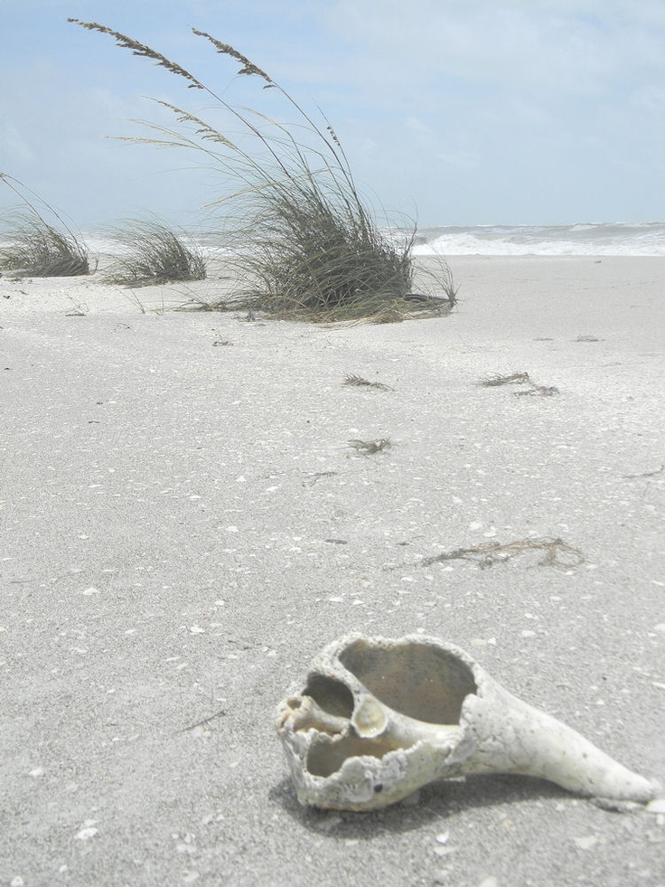 Sanibel Island Florida: Katherine uses these kinds of shell along as the walks & to line the flower beds.