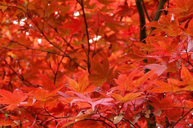 Why do tree leaves turn red in fall?: Beautiful Earth, Natural Rainbows, Natural History, Autumn Leaves, Mashabl Natural, Rainbows Colors, Leaves Protection, Leaves Turning, Natural Colour
