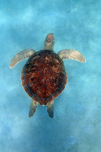 The Sea Turtles of Playa Piskado | For 91 Days in Curaçao – Travel Blog