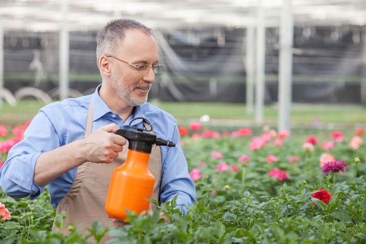 ***Usos del Bicarbonato de Sodio en el Jardín*** No sólo es para cocinar y para limpiar. Conoce los sorprendentes usos del bicarbonato para que tu jardín esté más resplandeciente que nunca antes.....SIGUE LEYENDO EN...... http://comohacerpara.com/usos-del-bicarbonato-de-sodio-en-el-jardin_12849h.html
