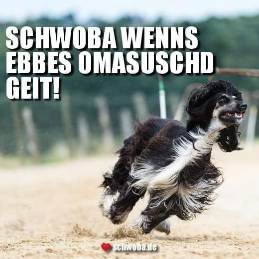 So semmer hald... #kostenlos #umsonst #sparen #schwäbisch #schwaben #schwoba #württemberg #spruch #sprüche