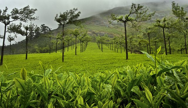 Het Utsukusy Thee Matcha ritueel is te boeken bij Utsukusy Schoonheidssalon. Waarom groene thee nou zou goed voor je is lees je hier: The Brainy Beaut: FACTSHEET | HUIDVERZORGING | Camellia sinensis - groene thee