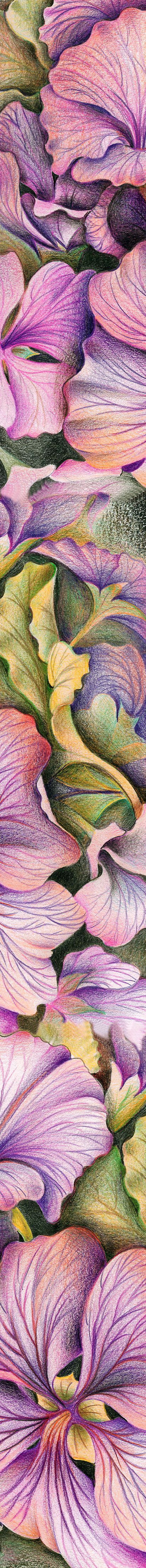 O'Keefe response. Flower close up using coloured pencils, showcasing blending techniques. Use photos that you have taken not images from the Internet.  DIANA ARIAS spanish artist